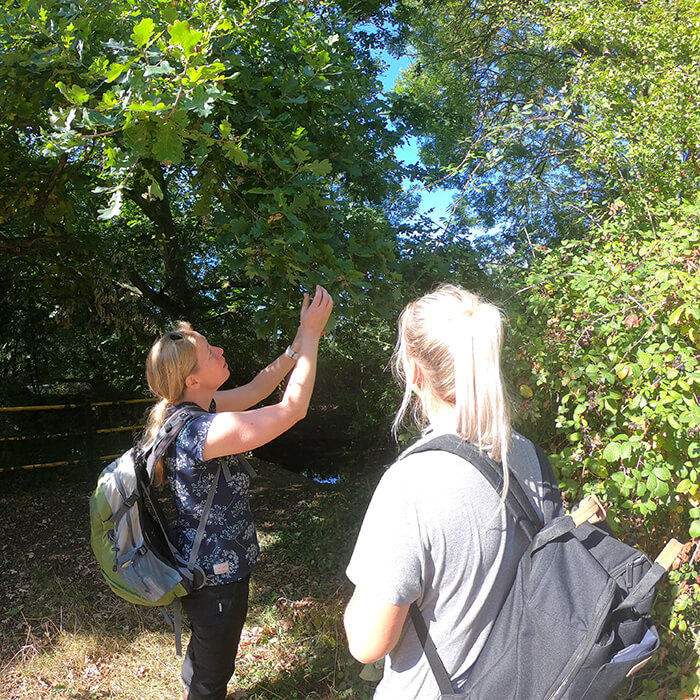 UK field trip - looking for gall wasps near River Pinn