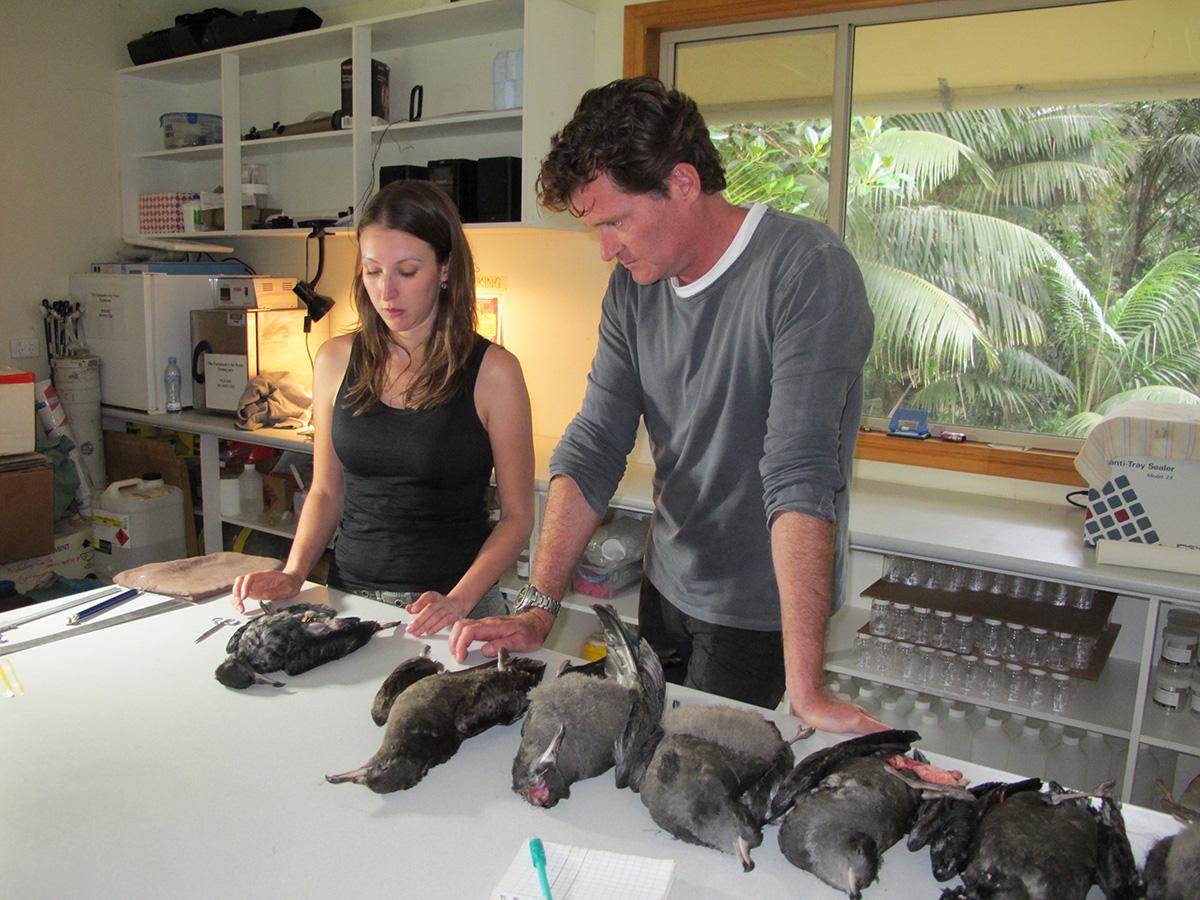 Dead seabirds Image Plastic Oceans Foundation