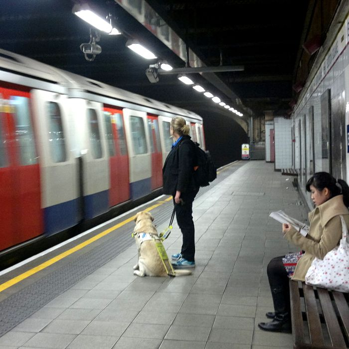 Guide_dog_user_on_the_tube_Euston_Square_16_November_2012 cropped_opt