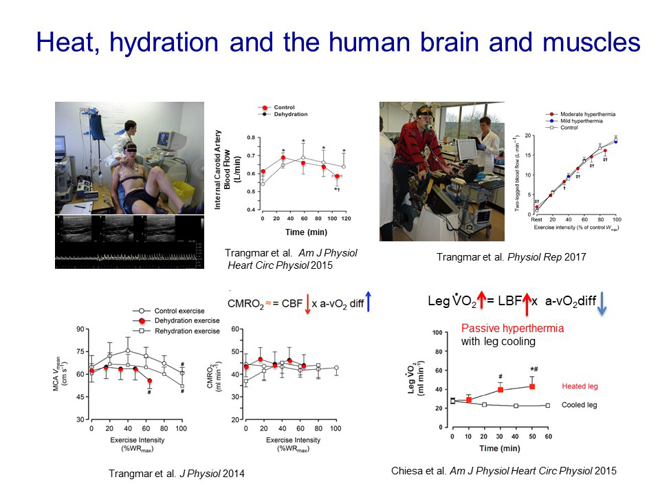 Fig 4 Hydration brain muscles and fatigue