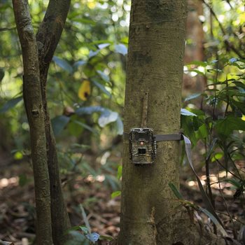 A deep learning model for global camera trap labelling