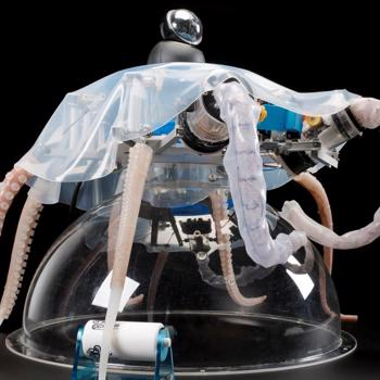 Creating bio-inspired soft robotics