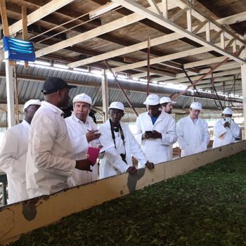 Innovative solar energy technology for Kenyan tea industry